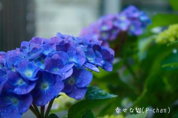 Wr20120527_kissf_020