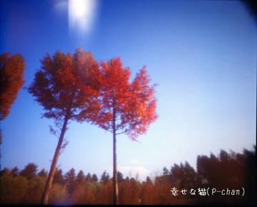 Wr0249mfh_0003