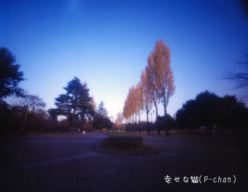 Wr0249mfh_0010