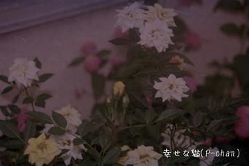 Wrsn1165a1v_0026