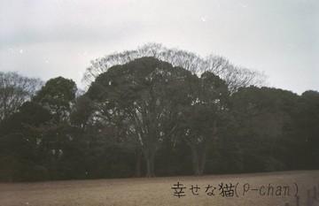 SN013-0015-ezv